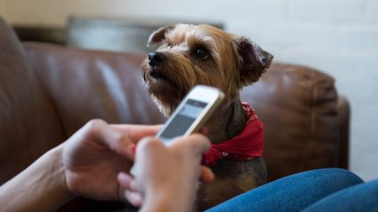 Dog sitting next to person on phone