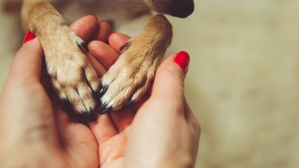 Woman holding dog paws
