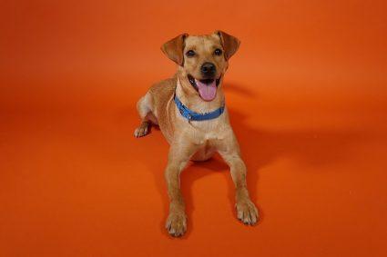 photo of Wpromote dog Arlo on orange background