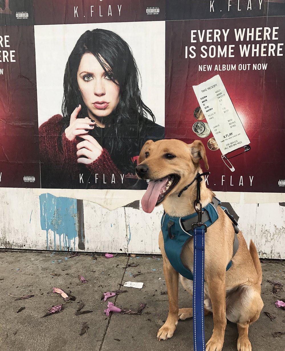 Miniature Pinscher mix dog sitting on sidewalk