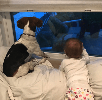 bixby and baby matilda looking out window