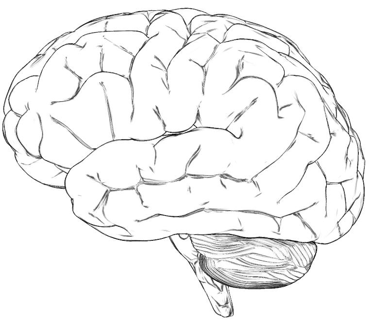 https://www.wpromote.com/wp-content/uploads/2020/04/brain-1.png
