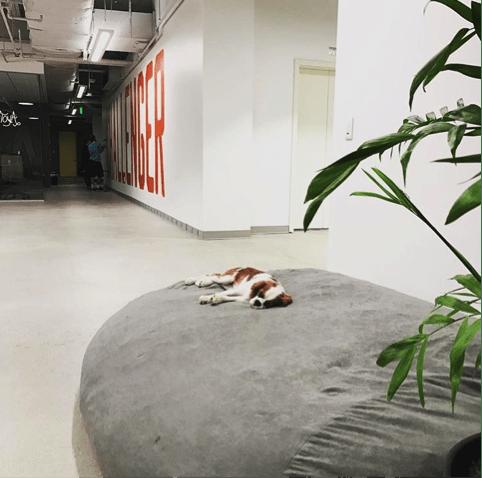charlie mothner sleeping on giant bean bag chair
