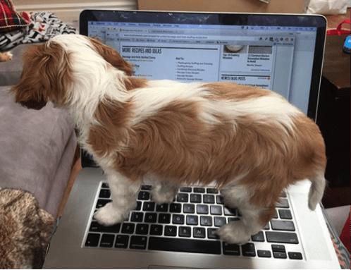 charlie mothner sitting on laptop