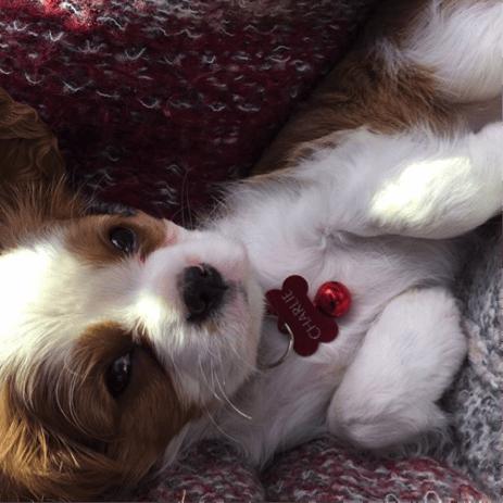 charlie mothner as puppy