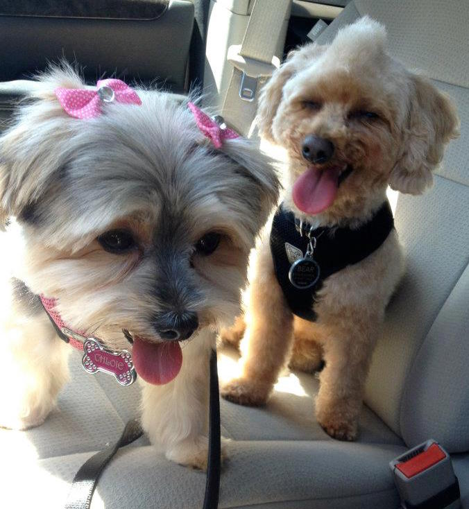 Chloie the pup with her pup friend