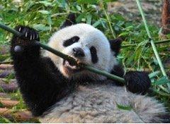 Google Panda Will Destroy Your Weak Content