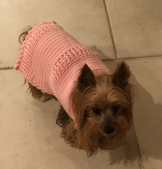 dog with crocheted sweater
