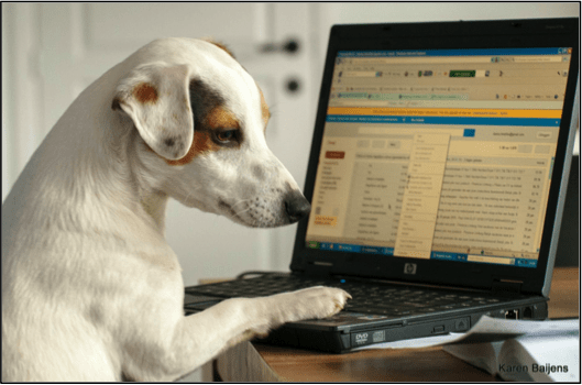 small dog typing on laptop computer